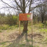 Reserva Ecol+¦gica Urbana 008