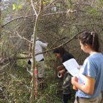 Reserva Ecol+¦gica Urbana 108