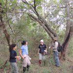 Reserva Ecol+¦gica Urbana 123