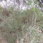 Reserva Ecol+¦gica Urbana 165